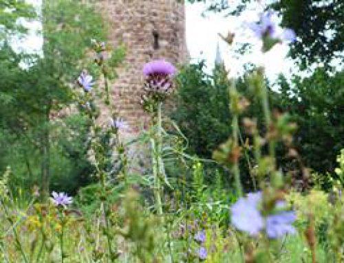 Weinheim: Grünes und Gesundes aus dem Heilkräutergarten