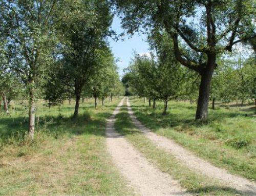 Mannheim: Naturschutzgebiet Reißinsel wieder offen