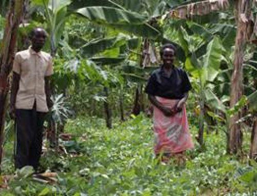 "Heidelberg: Fotoausstellung ""Ökologischer Landbau in Ruanda"""