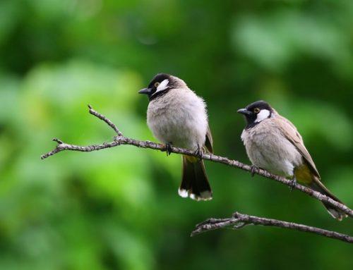 Umwelttipp im März – Vogelfreundlicher Garten: Vögeln ganzjährig einen Lebensraum schaffen