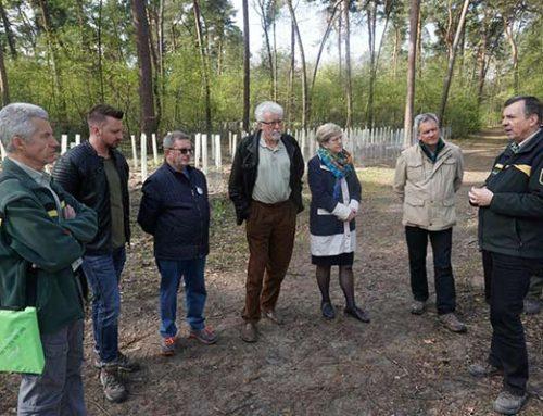 Mannheim: Stadt pflanzt Bäume für den Wald von morgen